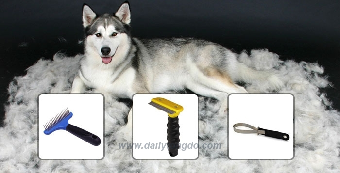 Lưu ý cắt tỉa lông cho chó husky, samoyed hay alaska 3 - c3