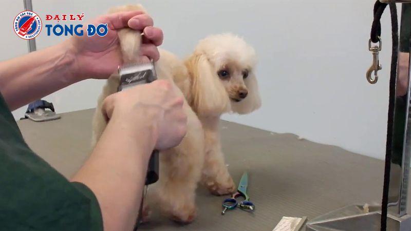 máy cắt lông cho chó