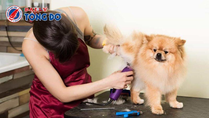 tông đơ cạo lông chó